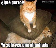 Memes de gatos - de que perro me hablas?