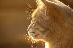 Kissa, Kissan Naama, Valo