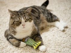 Maru:[This is mine. This is my treasure.]