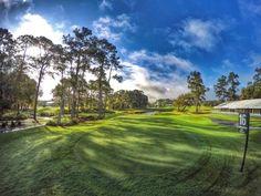 Golf at TPC Sawgrass #16