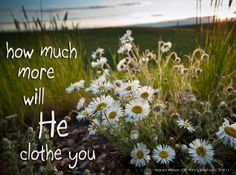 But if God so clothes the grass, which is alive in the field today, and tomorrow is thrown into the oven, how much more will he clothe you, O you of little faith! ~ Luke 12:28