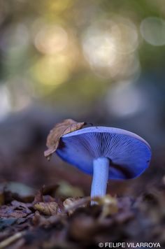 Beautiful coloured mushroom.
