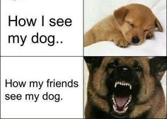 True story, I'm the friend without  a dog.