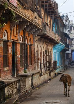 Cow in the City - Varanasi, India *** See more beautiful places at… Varanasi, Goa India, North India, People Around The World, Around The Worlds, Street Photography, Village Photography, Indian Photography, Photography Backdrops