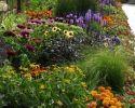 42 Container Flowers, Flower Planters, Flower Pots, Outdoor Planters, Hanging Planters, Outdoor Gardens, Landscape Design, Garden Design, Thyme Plant