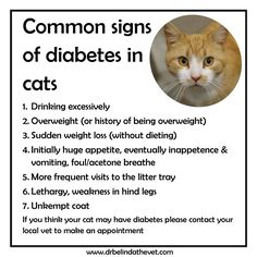 Do you know the signs of diabetes in your cat? This is what to look out for!    #pet #care #diabetic #cats #health #education #tips