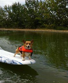 Splish Splash Summer: #Corgis Gettin' Wet!