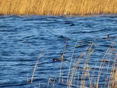 Värskendav looduse kutse loodusblogi vahendusel http://www.minest.ee/loodusblogi