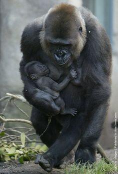 Ten Day Old Gorilla