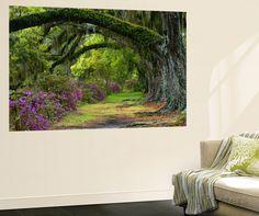 Coast Live Oaks and Azaleas Blossom, Magnolia Plantation, Charleston, South Carolina, Usa Premium Wall Mural at AllPosters.com