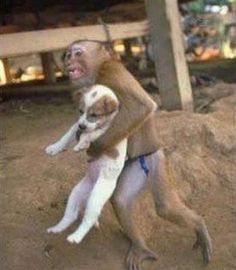25 Monkeys That Are Obsessed With Dogs