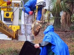 Grab the Honey Bee Removal Tampa service.  #Ecobeeremoval is always careful how to approach the bees.  This Africanized angry #honeybees come from Africa and we professionally remove them.
