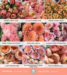 July Flowers, Peach Flowers, Colorful Flowers, Flower Colors, Exotic Flowers, Yellow Roses, Pink Roses, Juliet Garden Rose, Flower Chart