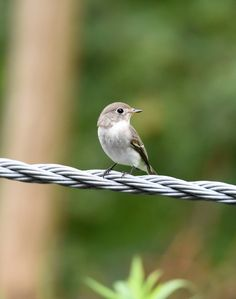 Cute Little Things, Little Birds, Tiny Bird, Backyard Birds, Cute Birds, Nature Photos, Beautiful Birds, Crow, Cool Pictures