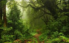 trees-path-bush-forest-viewes-magic-fern-spring.jpg (2560×1600)