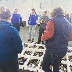 En unos minutos comienza la subasta en la #lonja De #Muros a Voz en Grito #yteloqueríasperder #tourism #Galifornia #Galicia #sea #fish #Gastronomy #almostsummer #AtlanticOcean #visitasguiadas #VisitasguiadasenGalicia by iriaguiagalicia