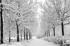 Preziosi inverni innevati, vi tengo tra le cose che non dimenticherò..