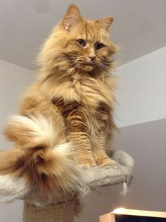 HE'S SO FLUFFY!! Animal Pictures, Pets, Animals, Images Of Animals, Animaux, Animal, Animales, Animais