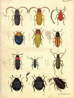18x24 Vintage Science Plate Poster. Insects. Beetles - 005. $30.00, via Etsy.