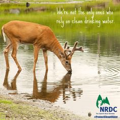 Clean drinking water| NRDC