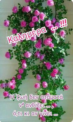Good Morning, Christmas Wreaths, Floral Wreath, Holiday Decor, Mornings, Greece, Buen Dia, Greece Country, Bonjour