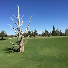 Pronghorn Resort's Nicklaus Golf Course in Bend, Oregon --------------------------- @socalgolfblog
