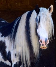 Equine. /What an amazing beauty EL./