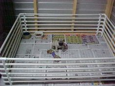 How to make your own puppy pen out of PVC Pipe- some great ideas here.
