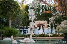 #Wedding #Swan #FourSeasons