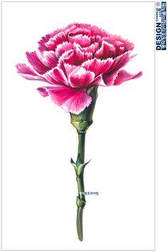 #사실묘사 #꽃 #식물 #카네이션 #carnation