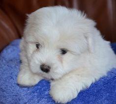 POLANA - Puppies