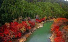 autumn trees wallpaper for desktops - autumn trees category
