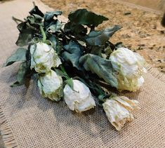 This bunch of fresh cut and dried gorgeous ivory roses is perfect for your floral needs. Approximately 15 inches in length with 6 roses. Roses are approximately inches in length and inches in diameter. These roses dried beautifully Drying Roses, Ivory Roses, Still Life, Floral, Image, Google, Flowers