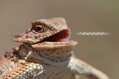 Feds Charge Alleged PoodleCorp And Lizard Squad DDoS Attackers
