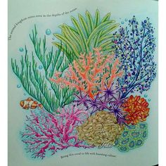 124 Best Animal Kingdom Coloring Book Images On Pinterest