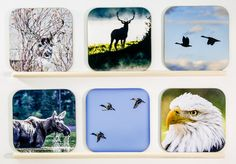 BEST SELLING ITEMS - Wooden Wildlife coasters, set of 6, Bar, wood, for dad, Groomsmen Gift, Wedding Party Gifts, drinkware, home accents, 2 by PicturesFromHeaven on Etsy