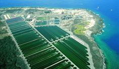 cyantoch_aerial_shot_of_algae_farms_at_keahole_point
