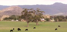 Macedon Ranges Community Macedon Ranges, Melbourne, Dolores Park, Scenery, Community, Australia, World, City, Heart