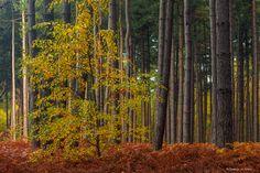 Autumn Woods - Kloosterbos, Zelzate, Belgium