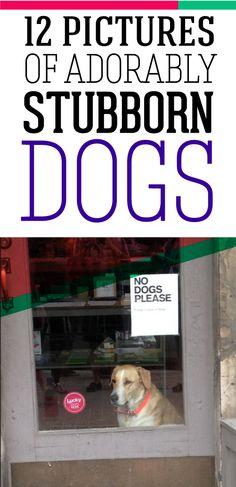 Adorably stubborn dogs.