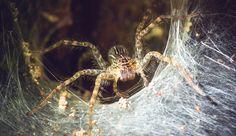 Spiders In Memphis: Millions Of Arachnids Cover Neighborhood In Massive Webs