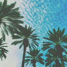 Palm trees and Ocean breeze! Take me there! Filtered by PastelAngel101™