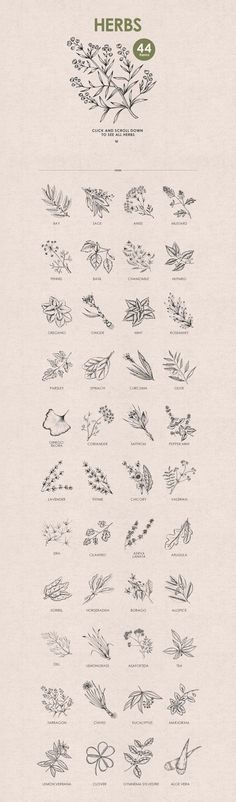 Herbs, Spices, Nuts. Hand drawn set.