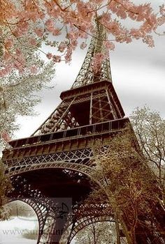 Amazing Snaps: Blossoms by the Eifel Tower, Paris | See more. Hermoso ángulo de la torre.......siempre me ha fascinado.