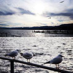 Calm. Winter, Zurich, Switzerland.