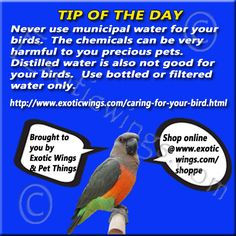 How to water your birds and keep them safe!