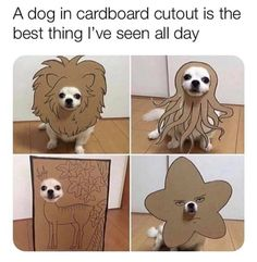 Funny Animal Memes, Cute Funny Animals, Dog Memes, Cute Baby Animals, Funny Cute, Funny Dogs, Animals And Pets, Animal Jokes, Hilarious Memes