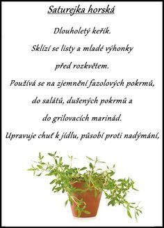 saturejka horská Korn, Herbs, Diabetes, Garden Ideas, Per Diem, Herb, Diabetic Living, Backyard Ideas, Spice