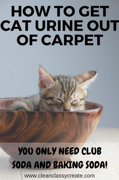 Cat urine and odors on your carpet is not pleasant. You only need club soda and baking soda to get that urine and odor out of your carpet! Cat Pee Smell, Cat Urine Smells, Dog Urine, Pet Odors, Cleaning Cat Urine, Cleaning Hacks, Fall Cleaning, Cat Urine Remover, Cat Hacks