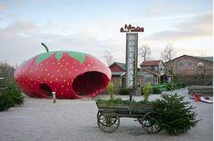 Karls Erdbeerhof: Der Apple unter den Erdbeeren - brand eins online